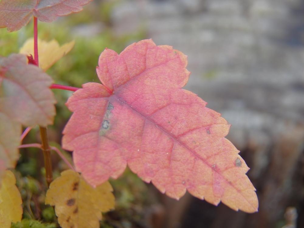"Mini Leaf (1"")"